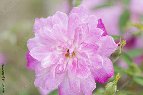 Tuinposter Azalea Beautiful May flowers