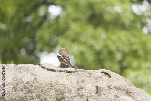 Little birdie on a tree Wallpaper Mural