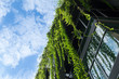Leinwanddruck Bild - Glass building house covered by green ivy with blue sky