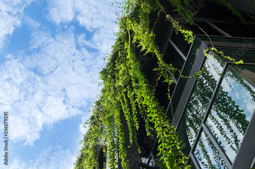 Foto Glass building house covered by green ivy with blue sky