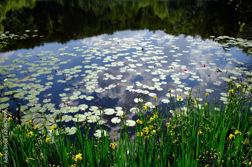 Foto  small lake