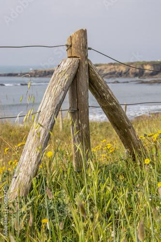 Fotografia, Obraz  Poteau de protection dans un champ en front de mer