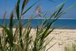 Dünenlandschaft mit Strandhafer