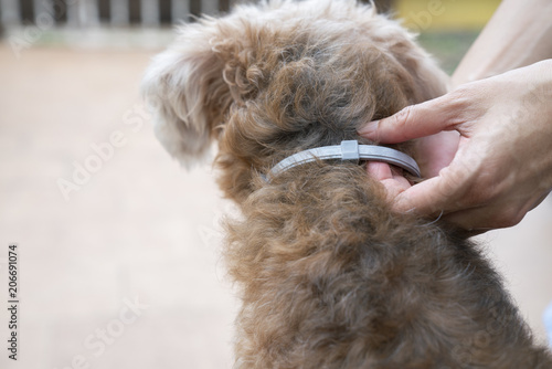 woman wearing a collar for dog, kill and repel tick and flea Fototapete