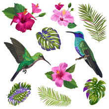 Watercolor Hummingbird, Hibiskus Flowers And Tropical Palm Leaves. Hand Drawn Exotic Colibri Birds And Floral Elements For Patterns, Decoration, Greeting Cards. Vector Illustration