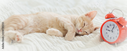 Fotografie, Obraz  Kitten Red Wool Alarm Clock Morning Feet Pet