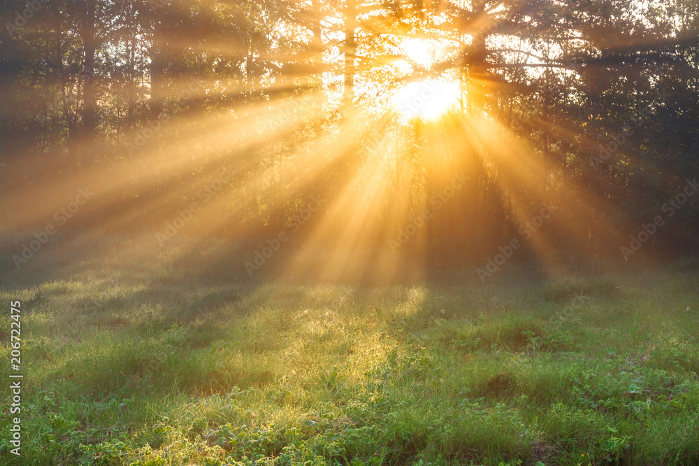 Fototapety, obrazy: sun rays shine through trees
