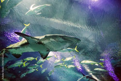 Foto op Aluminium Draken Shark in the oceanarium