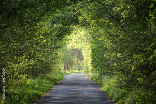 Foto op Canvas Weg in bos Natural green tunnel of trees on a beautiful summer day, Tura, Hungary, Europe
