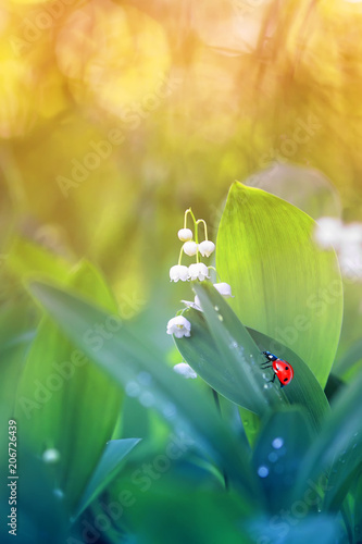 Foto op Aluminium Lelietje van dalen a little ladybug crawls on green juicy foliage and white Lily of the valley flower on a Sunny spring day in a forest glade