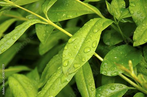 Tekstura liści