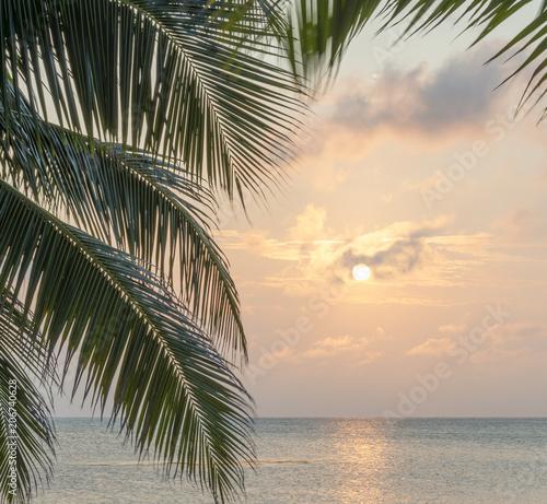 In de dag Ochtendgloren Caribbean Sunrise Palms Background