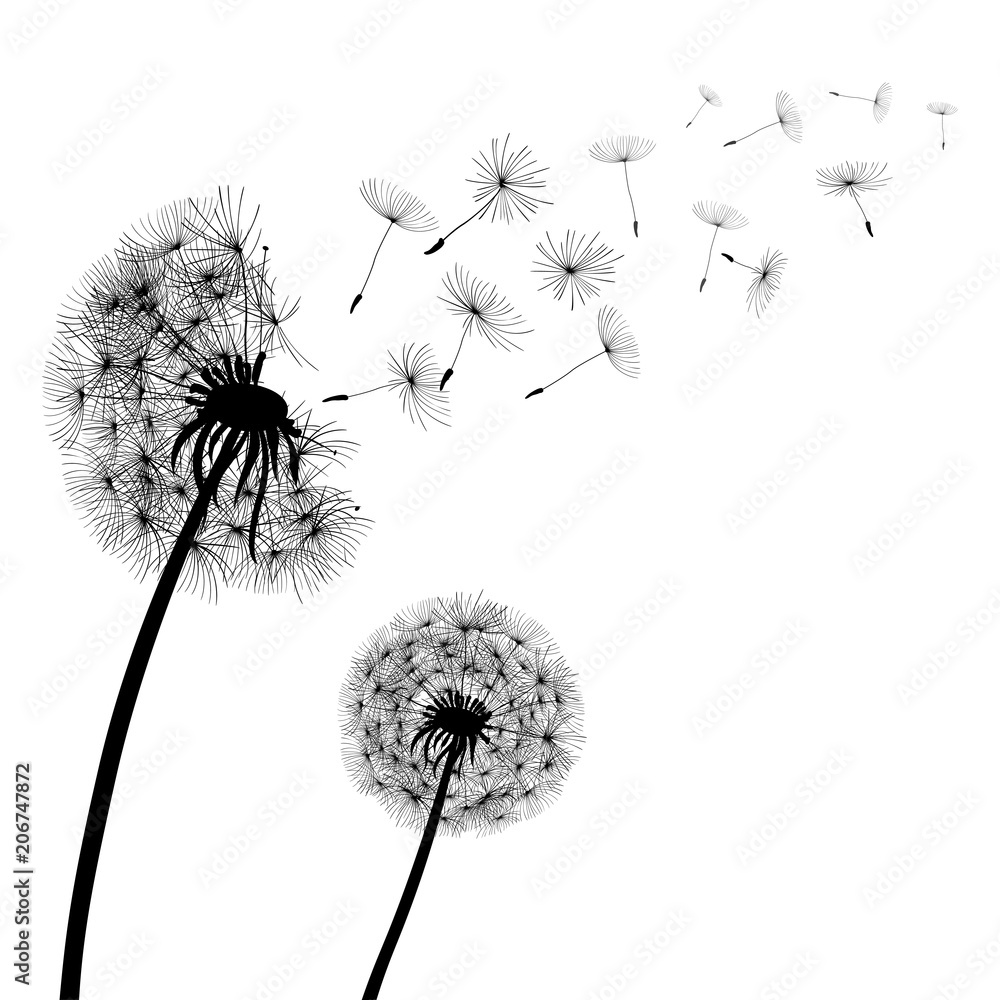 Fototapety, obrazy: Abstract black Dandelions, dandelion with flying seeds – stock vector