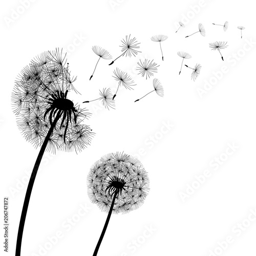 Abstract black Dandelions, dandelion with flying seeds – stock vector