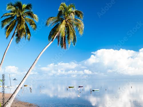 穏やかな夏の海とヤシの木