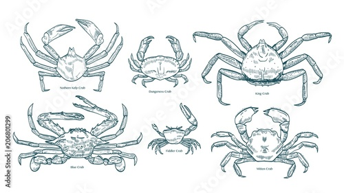 Collection of elegant drawings of various types of crabs Canvas Print