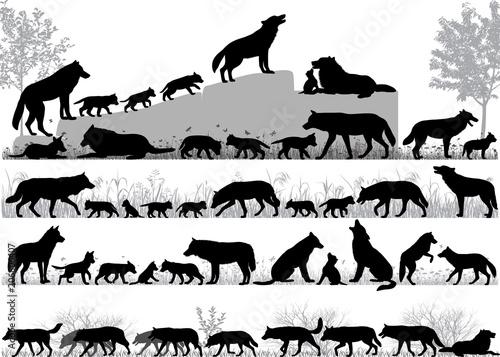 Naklejka premium Sylwetki wilków i jego młodych na zewnątrz