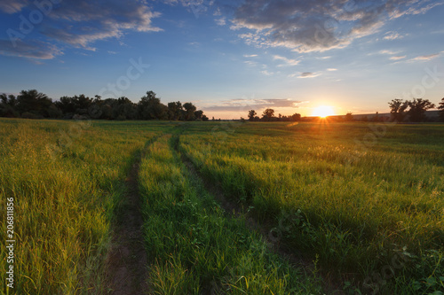 Foto auf Gartenposter Landschappen Volgograd Oblast, Russia. The road in field. Green grass. Sunset light. The sun goes beyond the horizon. Blue sky and clouds. In the background trees. Landscape in the countryside