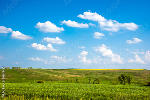 Foto op Canvas Pool Charming landscape with a strip of yellow rape in the middle of a green wheat field against a background of cloudy sky