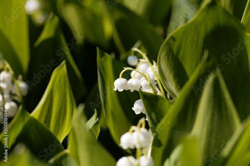 Staande foto Lelietje van dalen Macro photo of Lily of the valley (Convallaria majalis) flowers w