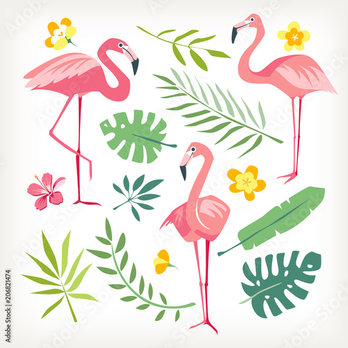 Fotografering  Flamingo bird tropicl leaves vector isolated collection white background
