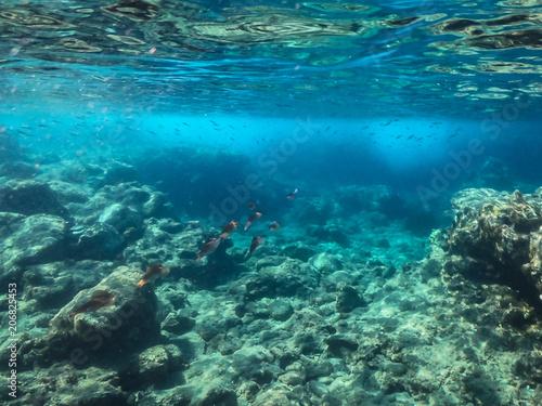 Fotobehang Koraalriffen Unterrwasserwelten