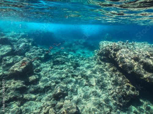 Staande foto Koraalriffen Unterrwasserwelten