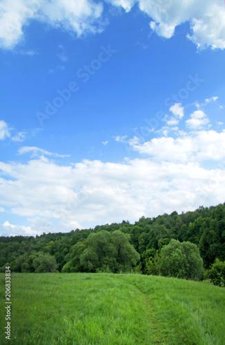 Foto auf AluDibond Karibik wild field of green grass against the blue sky, landscape