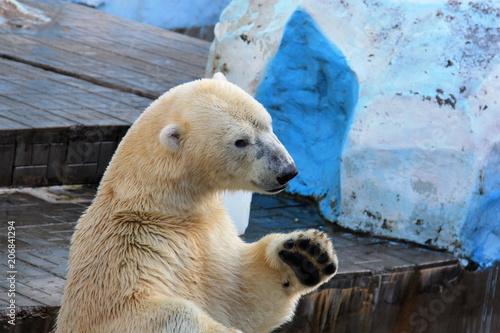 Staande foto Ijsbeer Polar bear water