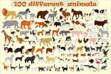 Fototapeta Fototapety na ścianę do pokoju dziecięcego - Collection of different vector animals on a light background