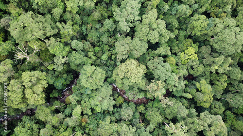 Fotobehang Bossen Rainforest. Aerial photo forest canopy in Borneo, Malaysia