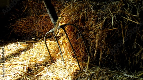 Valokuva old pitchfork In a haystack in a barn. farm tools