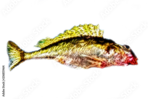 Computer Drawing Colour Sketch Of Fish Buy This Stock