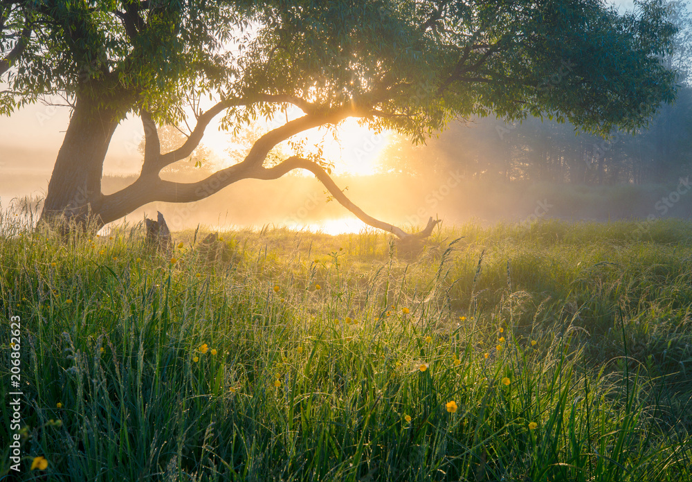 Fototapeta Summer nature. Misty morning. Beautiful tranquil morning landscape.