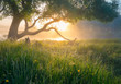 canvas print picture - Summer nature. Misty morning. Beautiful tranquil morning landscape.