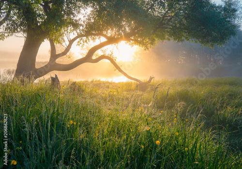 Obraz Summer nature. Misty morning. Beautiful tranquil morning landscape. - fototapety do salonu