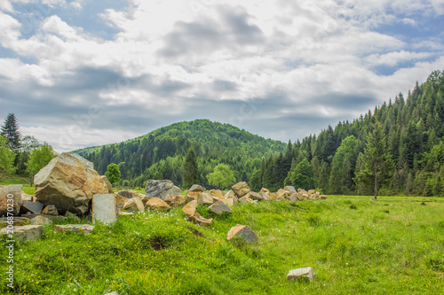 Fotobehang Bleke violet Nature forest mountain valley with stream beautiful landscape