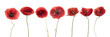 Three red poppies isolated