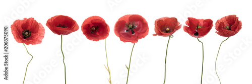 Foto op Canvas Poppy Three red poppies isolated