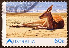Kangaroo Resting On The Beach ...