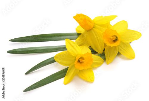 Photo Flowers yellow narcissus.