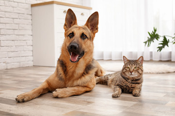 Adorable cat and dog restin...