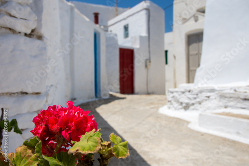 Photo Pink flower in focus and  multi colored doors and a white stone walls  in the ba
