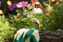 Close-up: Garden Tools And Glo...