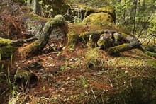 Stolby Nature Sanctuary Near K...