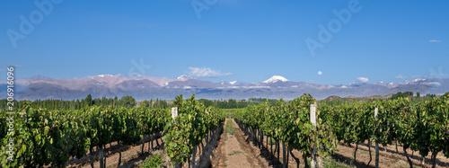 Foto  Grape plantation mountains