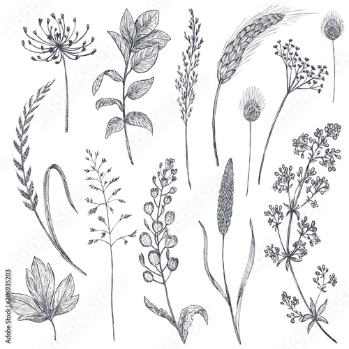 Set of herbs and flowers, hand drawn vector illustration. Wallpaper Mural