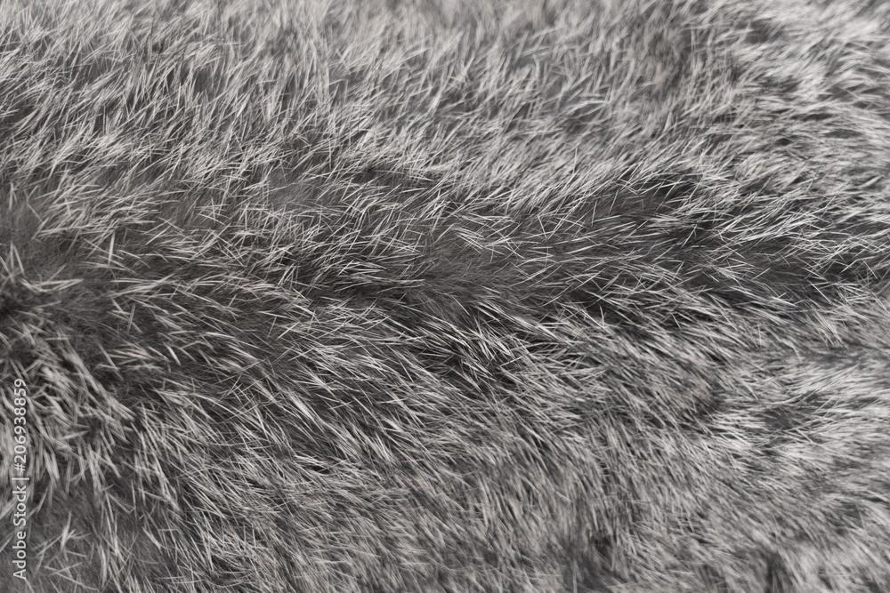 Fototapeta close-up on rabbit fur
