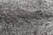 Close-up On Rabbit Fur