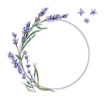 Violet Lavender. Floral Botanical Flower. Frame Border Ornament Square. Aquarelle Wildflower For Background, Texture, Wrapper Pattern, Frame Or Border.